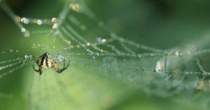 spider-386427_640